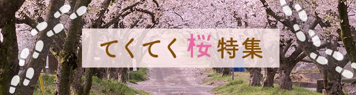 てくてく桜特集