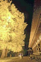 幻想的な『黄色の世界』...「長床」ライトアップ 新宮熊野神社