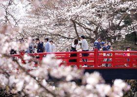 開花した弘前公園の桜。大勢の観光客でにぎわっていた=21日、青森県弘前市