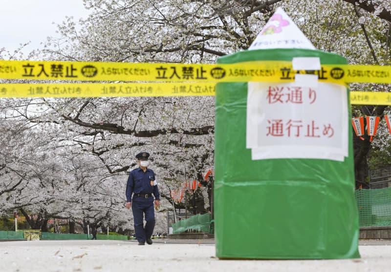 新型コロナウイルス対策で一部通路が通行止めになり、人影がなくなった東京・上野公園の桜通り=27日午後