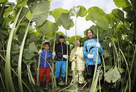 日本最大のフキ、ラワンブキが収穫の最盛期を迎え、刈り取り体験会で笑顔を見せる子どもたち=23日、北海道足寄町(魚眼レンズ使用)