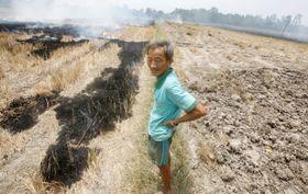 ベトナムのメコンデルタ地域で、干ばつに見舞われて乾いた水田を焼く農家の人=2016年3月(ロイター=共同)