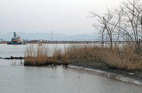 遺体が見つかった九頭竜川の河川敷=19日午後5時14分、福井県坂井市三国町