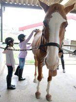馬の背中をブラッシングする子どもたち