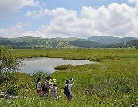 散策する人たちでにぎわった八島ケ原湿原=11日、下諏訪町