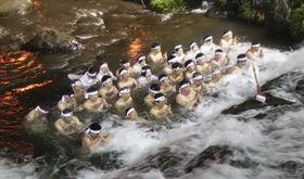 水の中で心身を清める参加者=雲仙市、千々石川