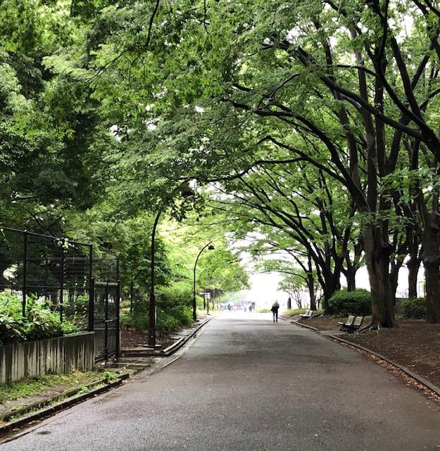 梅雨入りを前に新緑が綺麗な東京・駒沢公園