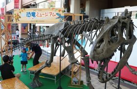 展示されているアロサウルスの骨格レプリカ=JR長崎駅かもめ広場