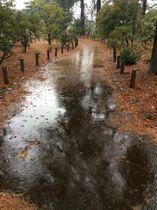 雨が降る2月の神代植物公園=東京、 筆者撮影