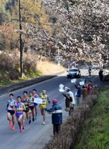 沿道に咲き誇る白梅の下を駆け抜ける選手たち=阿久根市鶴川内