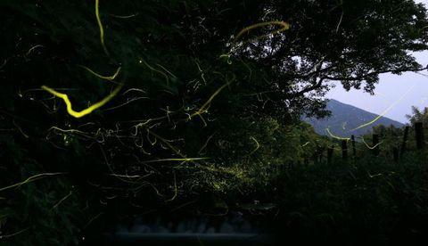 ホタルが乱舞する出の山公園=28日午後8時9分から8分間露光、小林市南西方