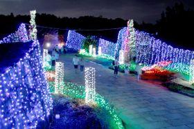 イルミネーションで彩られた園内=香川県まんのう町吉野、国営讃岐まんのう公園