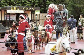 園内を回るミニチュアホースのクリスマスパレード=裾野市須山の富士サファリパーク