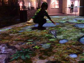 オオサンショウウオがのっそりと動く映像が床に投影されたプロジェクションマッピング(京都下京区・京都水族館)