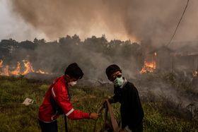 インドネシア・カリマンタン島での森林火災の消火活動=13日(ゲッティ=共同)