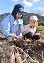 力を合わせてベニアズマを収穫する大船渡東高の生徒と立根保育園の園児