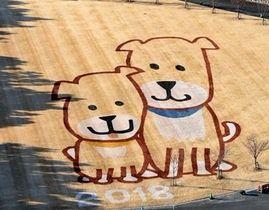 展望塔から見られる犬2匹の地上絵=浜松市西区の浜名湖ガーデンパーク