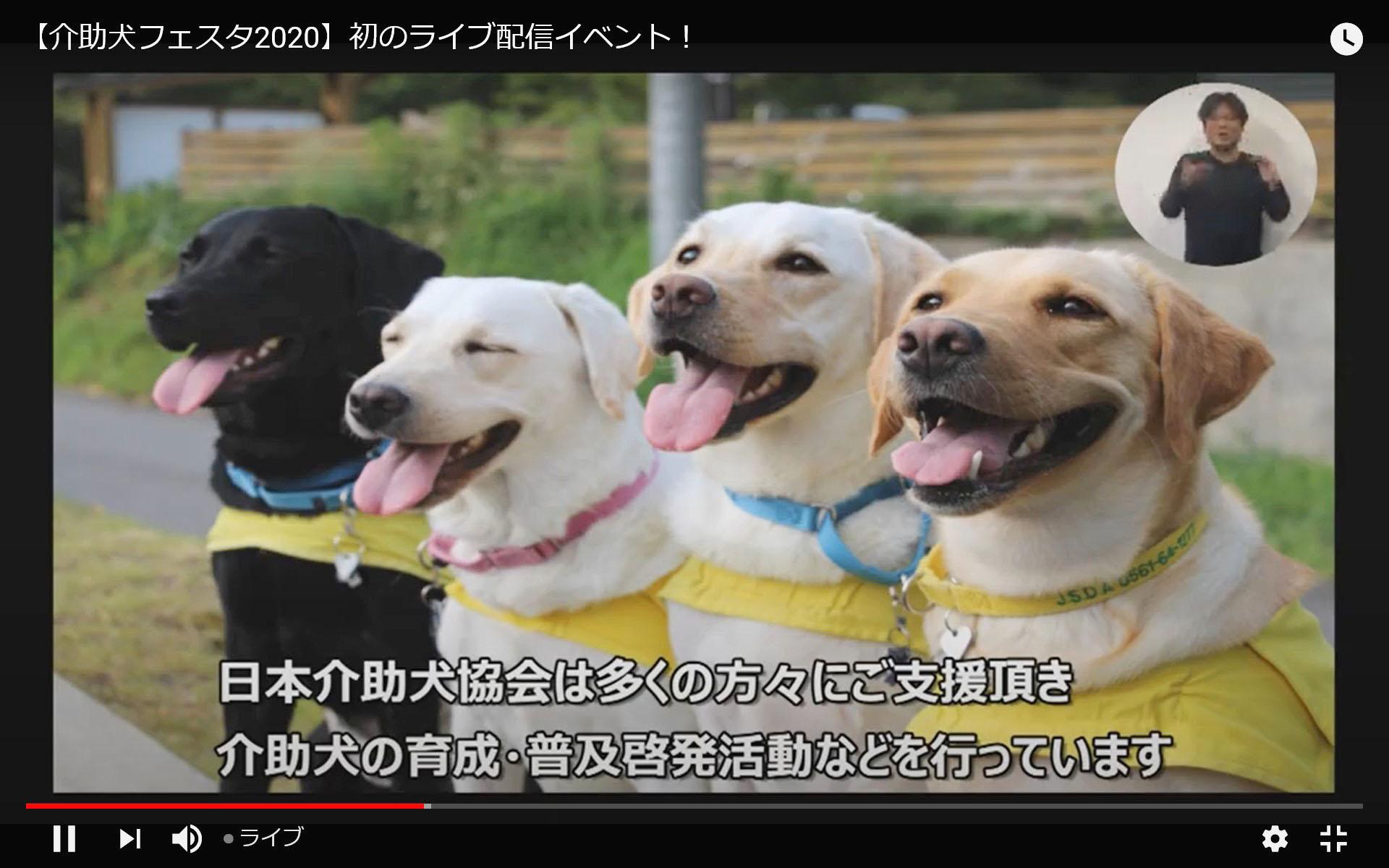 初のオンライン開催となった「介助犬フェスタ」の配信動画の一場面(ユーチューブから)