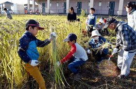 休耕田を再生した田んぼで稲を刈り取る子どもたち