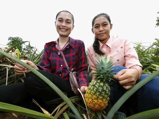 農地のほとんどでパイナップルを栽培するフアイムン村の若きリーダー、ティダラート(右)とサイナムフン姉妹は「早く日本に輸出したい。きっと喜んでもらえるわ」と目を輝かせる=2019年6月、タイ・ウタラディット県(共同)