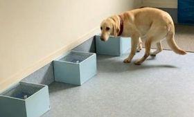 においをかいで、がんの有無を判定するがん探知犬(山形県金山町提供)