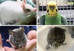 多様化する「エキゾチックアニマル」と呼ばれるペット。(左上から時計回りに)ウサギ、セキセイインコ、クサガメ、ハムスター