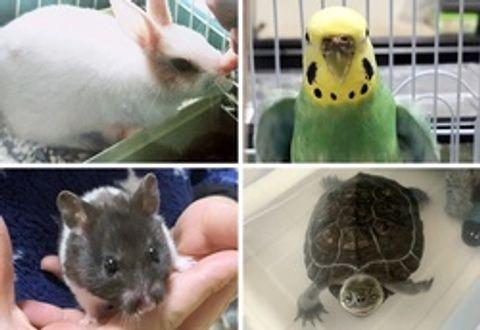 濃厚接触避け、健康に飼う ペット由来感染でシンポ 犬、猫以外にも注意を
