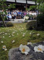 雨露にぬれたコケの上に落ちたナツツバキの花(15日午前10時5分、京都市右京区・東林院)