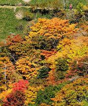 鮮やかに色づき始めた剣山山頂周辺