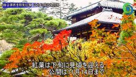 大正天皇が使用した御用邸を特別公開 紅葉に合わせ、日光田母沢御用邸公園