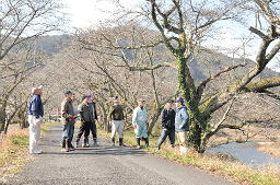 神戸川沿いに続く殿森の桜並木と自治会メンバーら