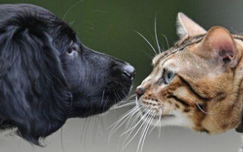 猫のコロナ感染で抗体 ワクチン開発に応用も
