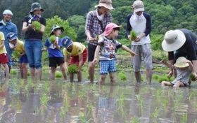 ぬかるむ土に苦戦しながら、田植えを楽しむ参加者