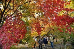 色とりどりの紅葉を楽しむ観光客=19日、伊佐市の曽木の滝公園