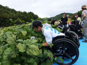 畑にビーチマットを敷いて枝豆の収穫をしたイベントの様子(2017年10月14日・兵庫県篠山市)=木戸俊介さん提供=