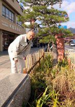 クロマツの周りにあしらった草花を見る川原副会長