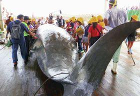 水揚げされたツチクジラに触る地元の児童ら=18日、千葉県南房総市の和田漁港