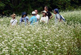 ソバの花が咲き誇る畑の散策を楽しむ参加者