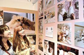 猫の写真パネルに見入る女性来場者=16日、静岡市葵区のパルコ静岡店
