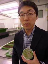 チューリヒ大の清水健太郎教授。手にしているのが、芽が出たばかりの「Cardamine insueta」=中東生撮影