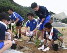完成間近のスタジアム内の花壇にドウダンツツジを植える釜石東中の1年生と釜石シーウェイブスRFCの選手ら