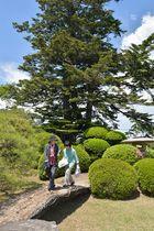 橋などで水を表現する「枯山水」が用いられている八戸南部氏庭園。後方の大樹は樹齢数百年といわれるモミの木