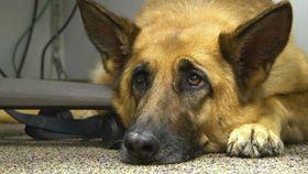 米ノースカロライナ州の犬=2014年2月(AP=共同)