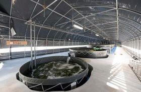 旧河内町立長竿小敷地にあるトラフグ養殖施設(トキタ提供)
