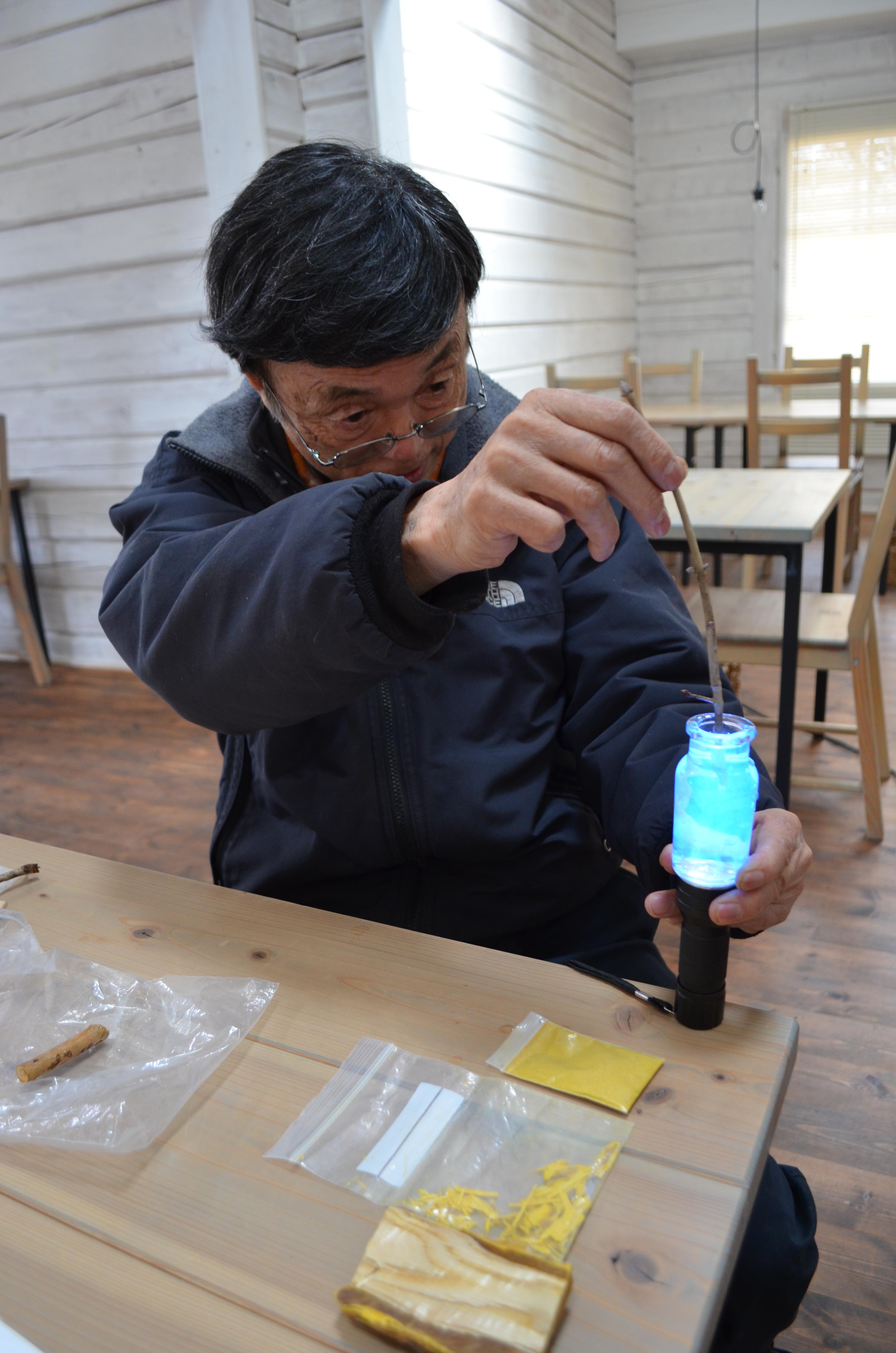 紫外線に反応する蛍光物質を持つアオダモ。手前の黄色い粉は「良薬は口に苦し」の語源ともなったキハダ。実際に山に入り、森の不思議と日本人の暮らしとの関わりを学べるエコツアーは驚きの連続だ