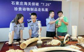 2017年8月、日本から違法輸入され中国当局が押収した象牙製品(中国・河北省石家荘税関撮影/WWFジャパン提供)