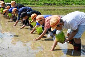 一本ずつ丁寧に稲を植える子どもたち=薩摩川内市祁答院町黒木