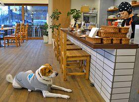 愛犬家に人気の店内。人懐こい元保護犬の「空」が来店者を和ませる