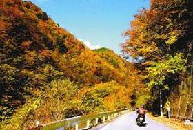 紅葉に包まれた県道426号=豊根村富山で