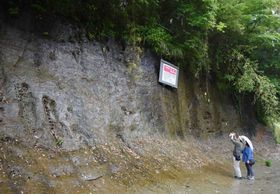 天然記念物に指定された地層=千葉県市原市